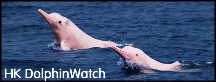 orakelspruch von delpin